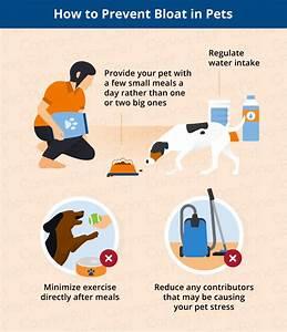 Bloat In Dogs  U0026 Cats  Causes  Signs   U0026 Symptoms
