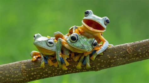 aesthetic frog wallpapers