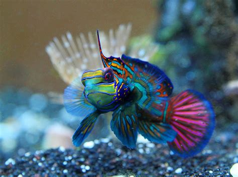 saltwater fish most beautiful saltwater fish all time ratemyfishtank com