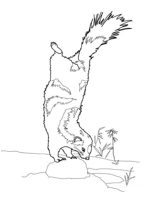 printable skunk coloring pages  kids