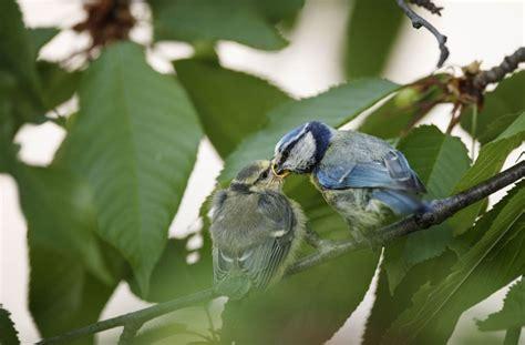 Garten Und Landschaftsbau Rems Murr Kreis by Naturschutz So Wird Ihr Garten Zum Vogelparadies Rems