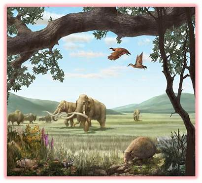 Cenozoic Era Earth Plant Rocks Evolution Mya