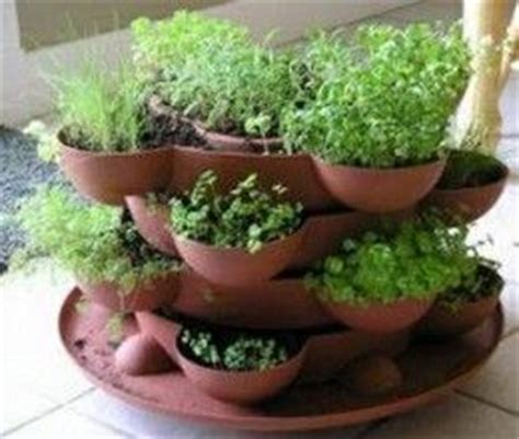 container herb garden for beginners