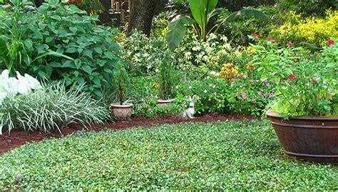 gulf coast gardening 5 tips to make your garden more