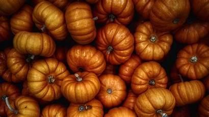 Harvest Pumpkin Autumn Vegetables Hdtv Fhd 1080p