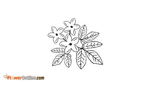 Jasmine Flower Outline @ FlowerOutline.Com