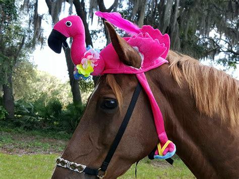 flamingo hat  horse  pony soft equine pink flamingo