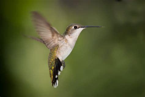 life is good hummingbird