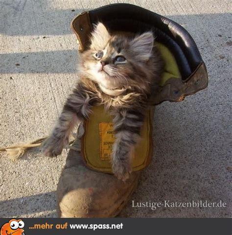 katzenbilder lustig mit spr 252 chen die 25 besten ideen zu lustige katzenbilder auf