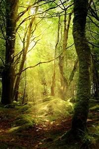 Kostenlose Bilder Herbst : kostenloses bild auf pixabay wald lichtung herbst moos kostenlose fotos kostenlose ~ Yasmunasinghe.com Haus und Dekorationen