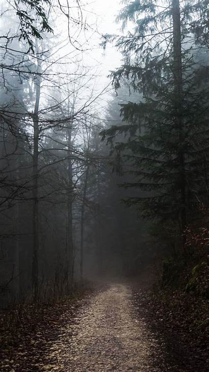 Gloomy Forest Foggy Autumn Path Weather Wallpapers