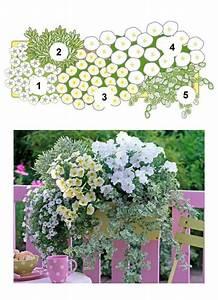 Kübel Bepflanzen Ideen : balkonblumen fantasievoll kombiniert garten balkon blumen garten und blumen ~ Buech-reservation.com Haus und Dekorationen