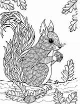 Squirrel Coloring Adult Pages Zentangle Colouring Adults Sheets Animals Flying Craft Veverka Woodland Coloringbay Crafts Mandalas Supplies Arts sketch template