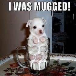 Really Funny Dog Memes
