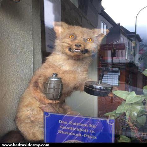 Taxidermy Fox Meme - top of the food chain bad taxidermy part iii