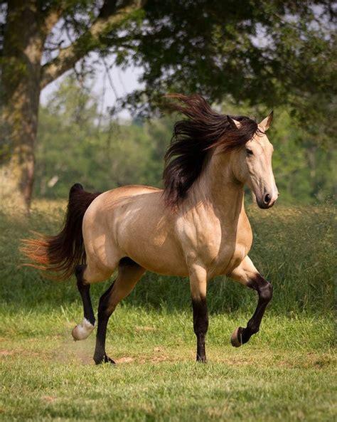 süße pferde bilder welche rasse k 246 nnte dieses pferd sein pferde