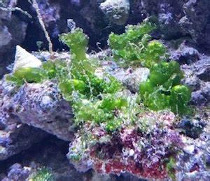 Welche Fische Passen Zusammen Aquarium : lebendgestein kaufen i korallen shop aquapro2000 ~ Lizthompson.info Haus und Dekorationen