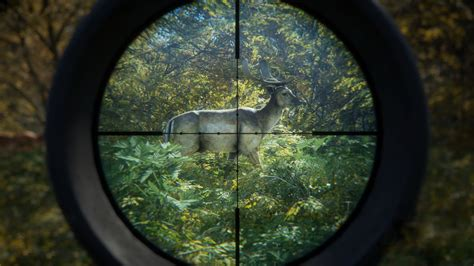 hunter call   wild   shoot