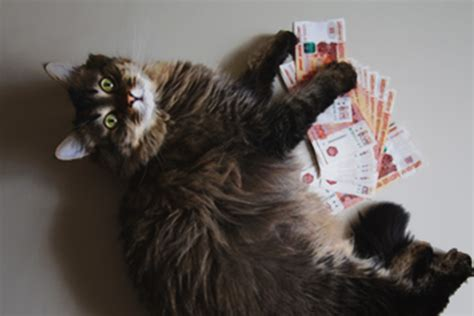 kostet eine katze im monat tierischeheldende