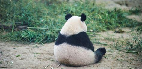 googles panda algorithm creating  endangered species