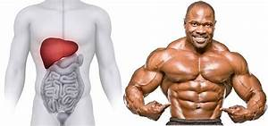 Liver Damage While On Oral Steroids