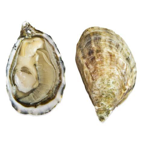 shigoku oysters  bulk marx foods