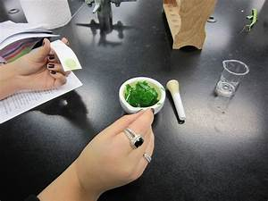Pigments In Spinach Chromatography Paper