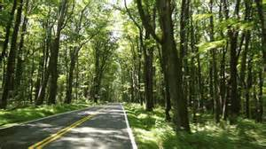 me trees nature travel forest road woods moss west virginia forest gif mossy forest