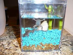 Will 5 Neon Tetra Fish And 2 African Dwarf Frogs Be Good