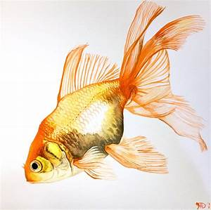 goldfish fancy fins watercolor by ~arjomar on deviantART ...