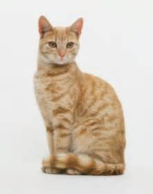 cat sitting reference cat sitting 78907474 tabby cat sitting