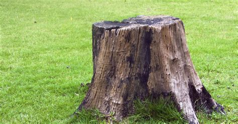 How To Make A Tree Stump Bird Bath  Ehow Uk