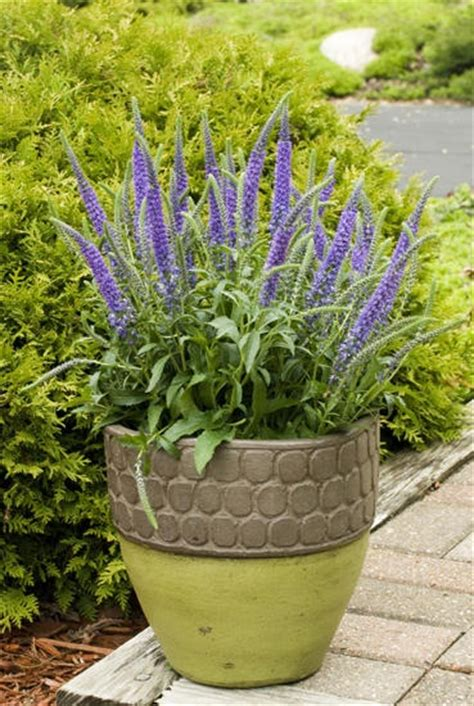 perennial containers container gardening ideas