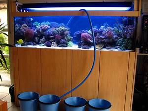 Aquarium Ohne Wasserwechsel : wasserwechsel ~ Eleganceandgraceweddings.com Haus und Dekorationen