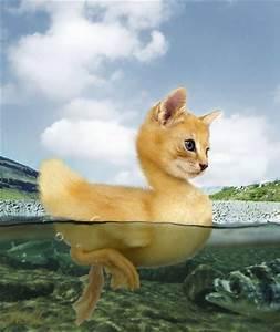 duck cat|duck cat funny|duck cat images|duck cat wall|duck ...