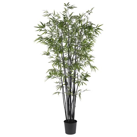 6 5 foot black bamboo tree potted 5277 nearly