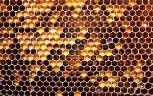 honeycomb   Honey Honeycomb Wallpapers, Honey Honeycomb ...  Honeycomb