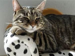 Question de la semaine : comment les chats font-ils pour ...