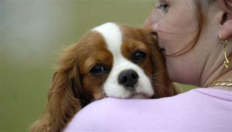 Negribi rējēju? 15 klusākās suņu šķirnes - DELFI
