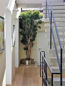 Pflanzen Im Treppenhaus : innenraumbegr nung pflanzen baum kaufen foyer empfang treppenhaus ~ Orissabook.com Haus und Dekorationen