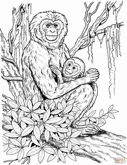Coloring Pages Mother Gibbon Monkey Adults Realistic