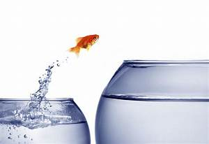 goldfish jumping out of the water   Achieving Skills