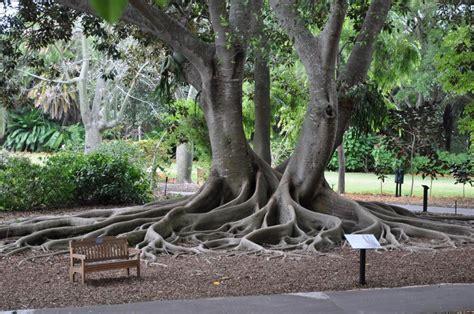 sarasota botanical gardens selby botanical gardens