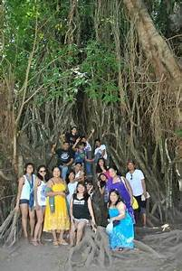 D' biggest Balete Tree in Asia - Picture of Baler, Aurora ...