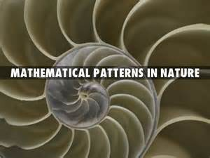 proportions math mathematical patterns in nature by laurenkomalley