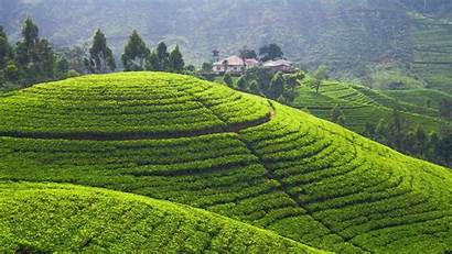 Sri Lanka Landscape Field Terraced Hill Srilanka