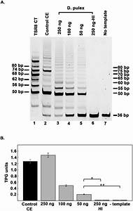 Telomerase Activity In Daphnia  A  Telomeric Repeat