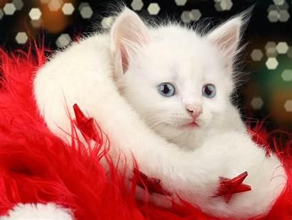 Kitty Christmas Hello Cat Cats Kittens Kitten