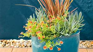 Drought Tolerant Container Plants Sunset - Sunset Magazine