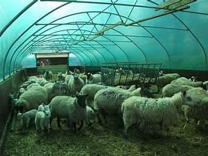 Animal Housing  U2013 Width 24 U2032  7 3m